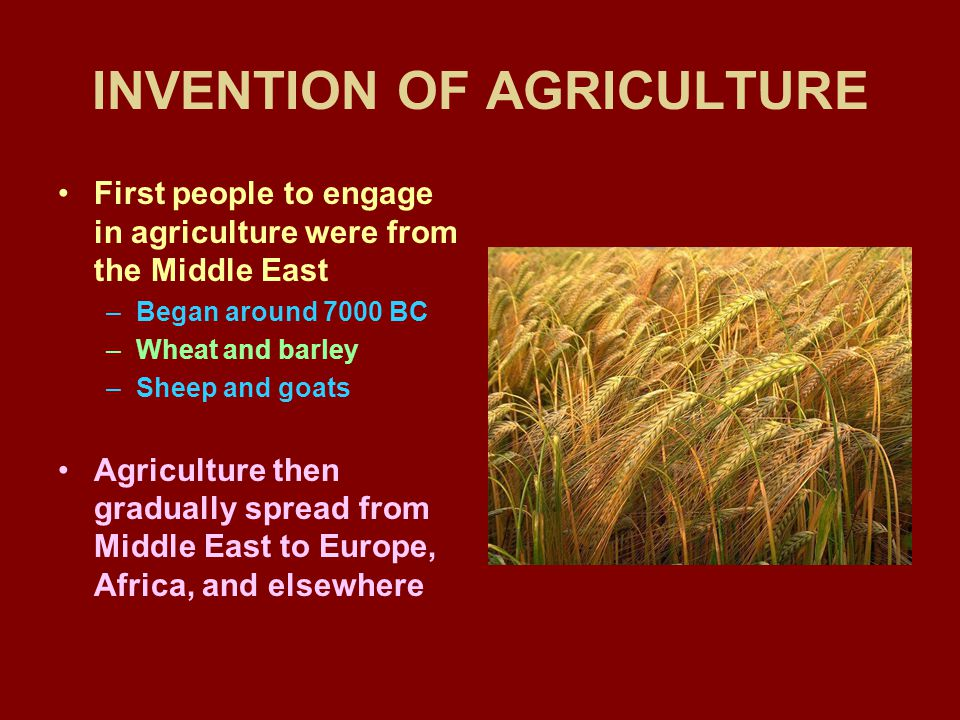 INVENTION OF AGRICULTURE First people to engage in agriculture were from the Middle East –Began around 7000 BC –Wheat and barley –Sheep and goats Agri