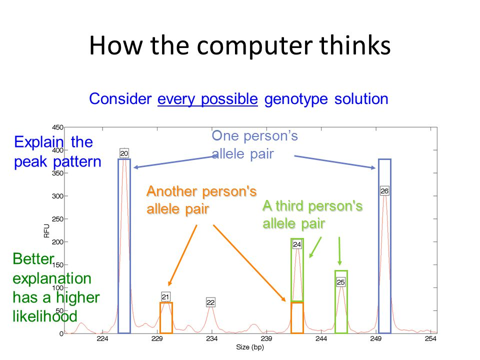 How the computer thinks Consider every possible genotype solution Explain the peak pattern Better explanation has a higher likelihood One person's all