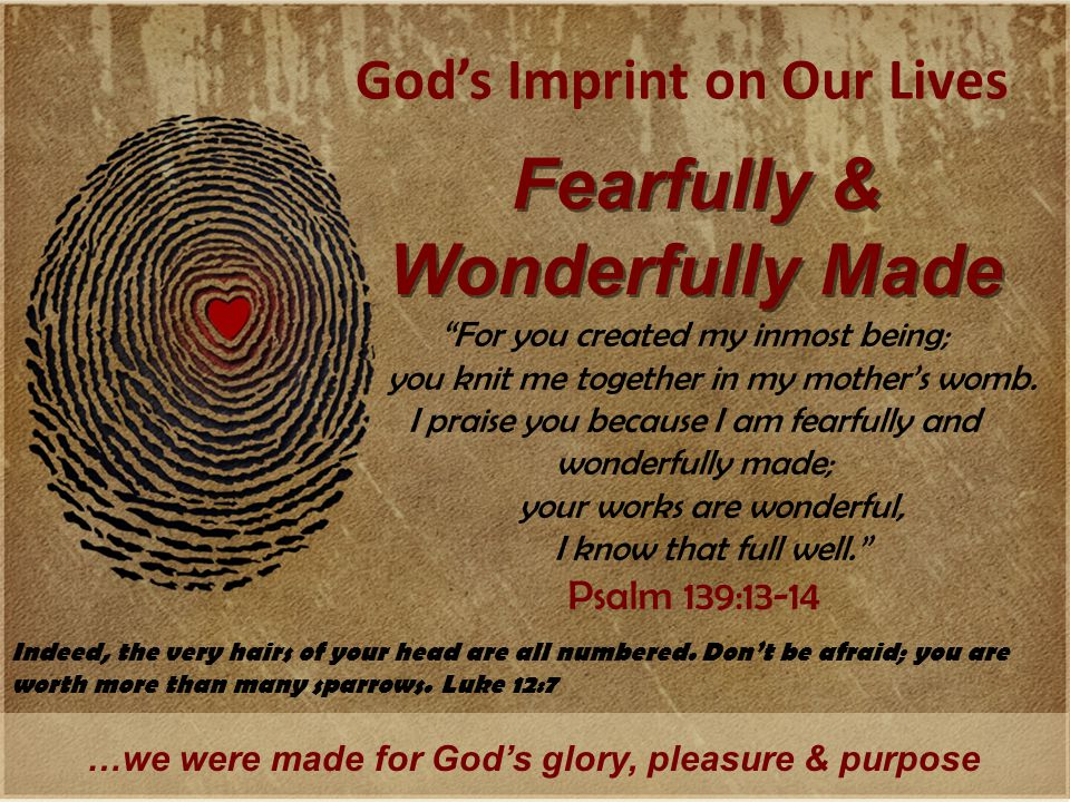 God's Imprint on Our Lives Fearfully & Wonderfully Made …we were made for God's glory, pleasure & purpose For you created my inmost being; you knit me together in my mother's womb.