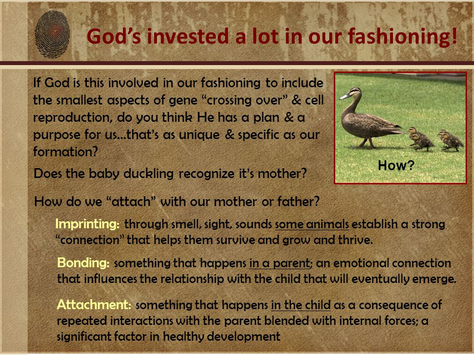 God's invested a lot in our fashioning.