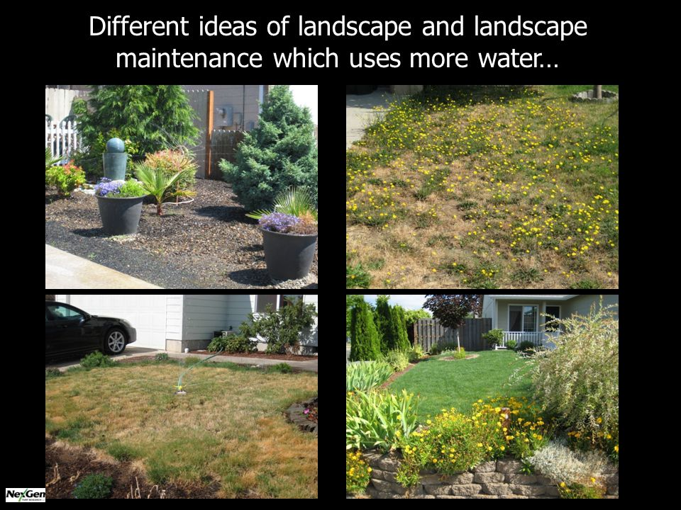 Different ideas of landscape and landscape maintenance which uses more water…