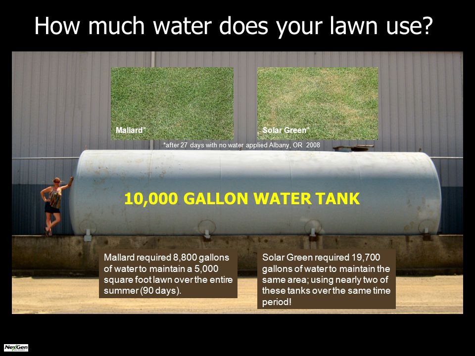 *after 27 days with no water applied Albany, OR 2008 10,000 GALLON WATER TANK Mallard*Solar Green* How much water does your lawn use.
