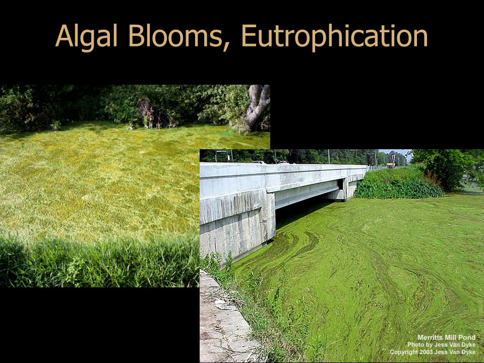 Algal Blooms, Eutrophication