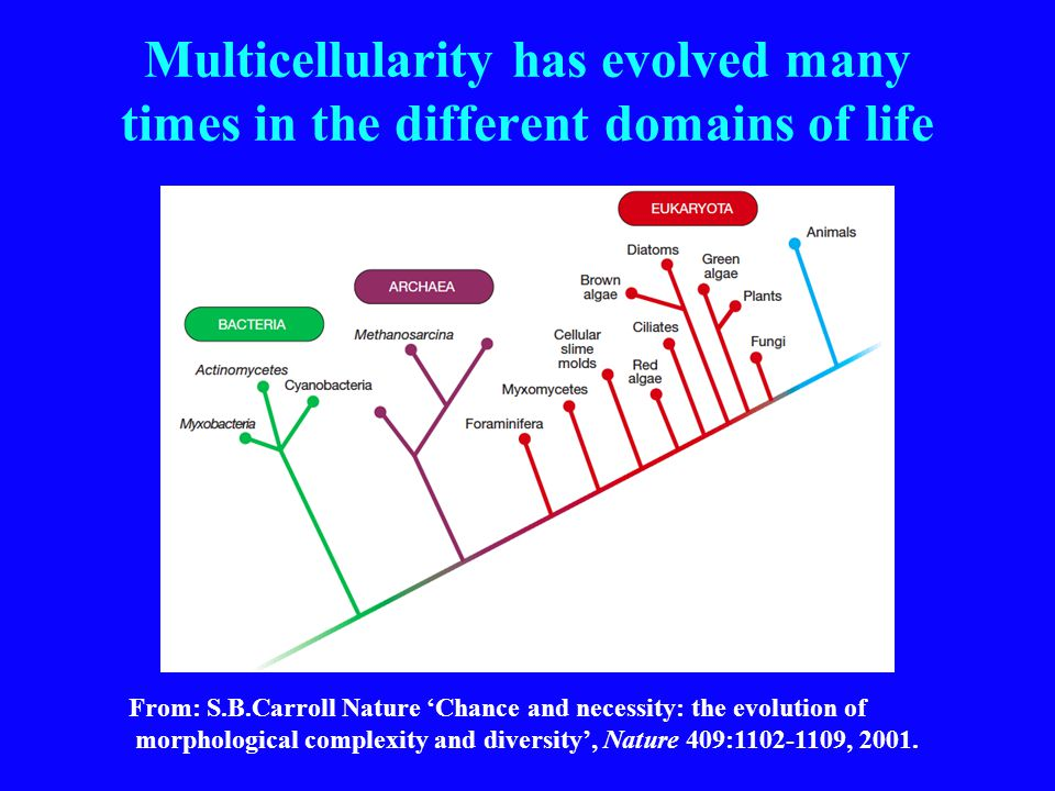 Multicellularity has evolved many times in the different domains of life From: S.B.Carroll Nature 'Chance and necessity: the evolution of morphological complexity and diversity', Nature 409:1102-1109, 2001.