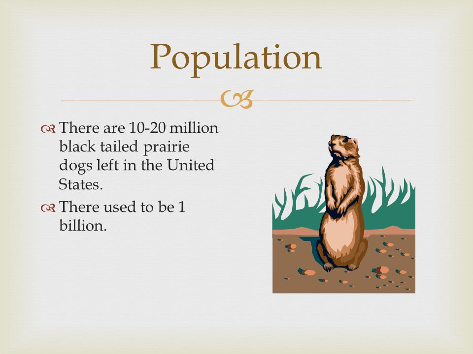  Population  There are 10-20 million black tailed prairie dogs left in the United States.  There used to be 1 billion.