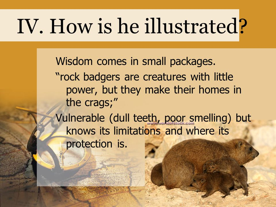 """IV. How is he illustrated? Wisdom comes in small packages. """"rock badgers are creatures with little power, but they make their homes in the crags;"""" Vul"""