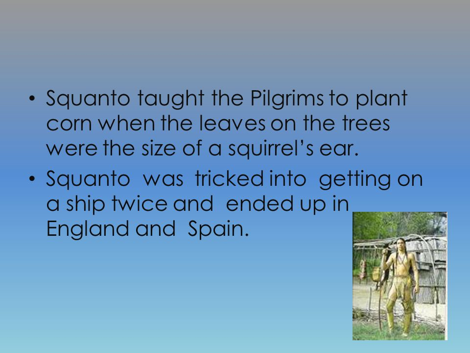 Pilgrims and Wampanoag Houses and Squanto Wampanoag people used cattails and bark to cover their houses.