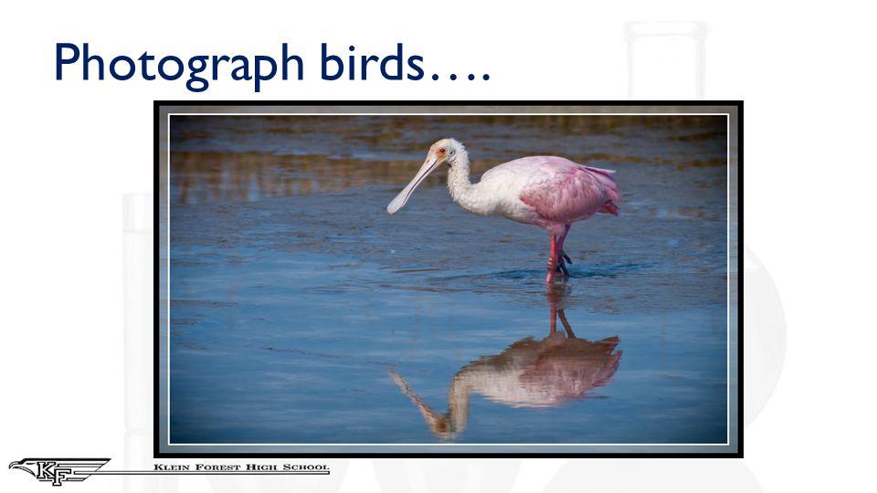 Photograph birds….