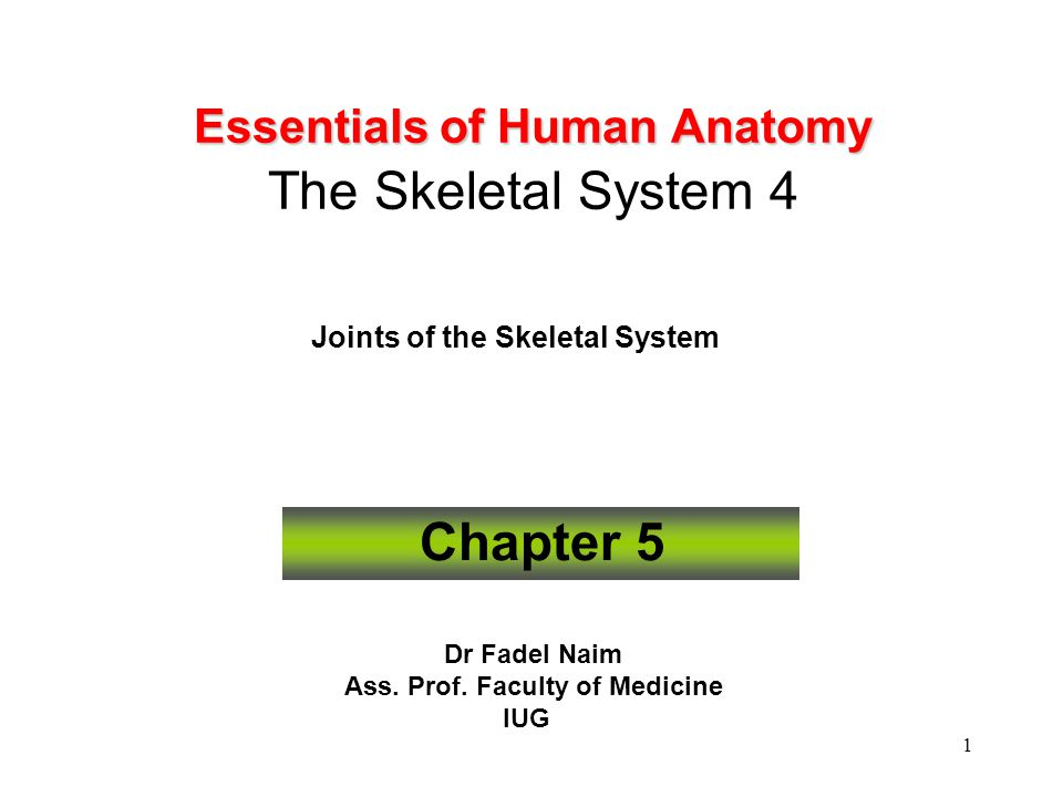 1 Essentials of Human Anatomy Essentials of Human Anatomy The Skeletal System 4 Joints of the Skeletal System Chapter 5 Dr Fadel Naim Ass. Prof. Facul