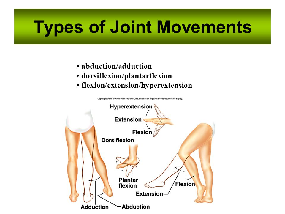 Types of Joint Movements abduction/adduction dorsiflexion/plantarflexion flexion/extension/hyperextension
