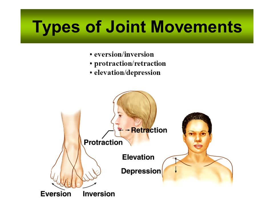 Types of Joint Movements eversion/inversion protraction/retraction elevation/depression