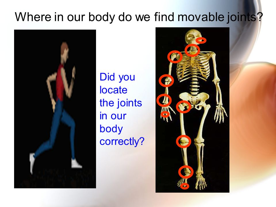 Where in our body do we find movable joints Did you locate the joints in our body correctly