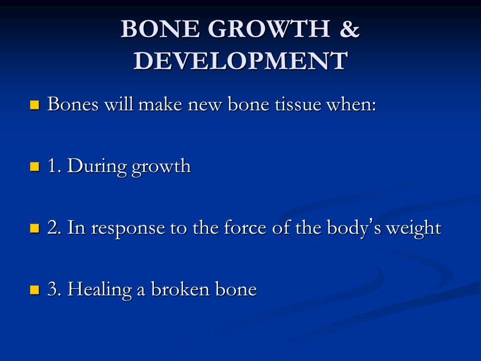 BONE GROWTH & DEVELOPMENT Bones will make new bone tissue when: Bones will make new bone tissue when: 1. During growth 1. During growth 2. In response