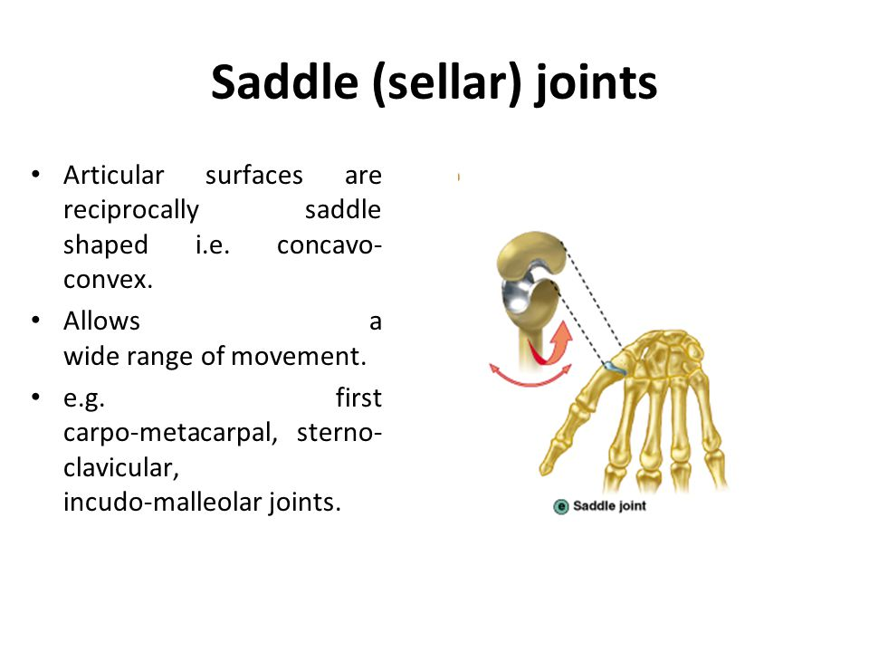 Saddle (sellar) joints Articular surfaces are reciprocally saddle shaped i.e. concavo- convex. Allows a wide range of movement. e.g. first carpo-metac