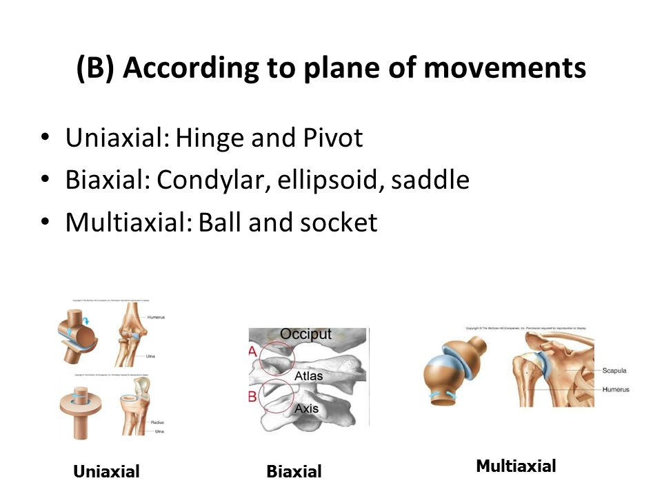 (B) According to plane of movements Uniaxial: Hinge and Pivot Biaxial: Condylar, ellipsoid, saddle Multiaxial: Ball and socket UniaxialBiaxial Multiax