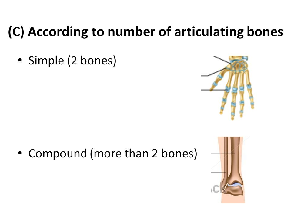 (C) According to number of articulating bones Simple (2 bones) Compound (more than 2 bones)