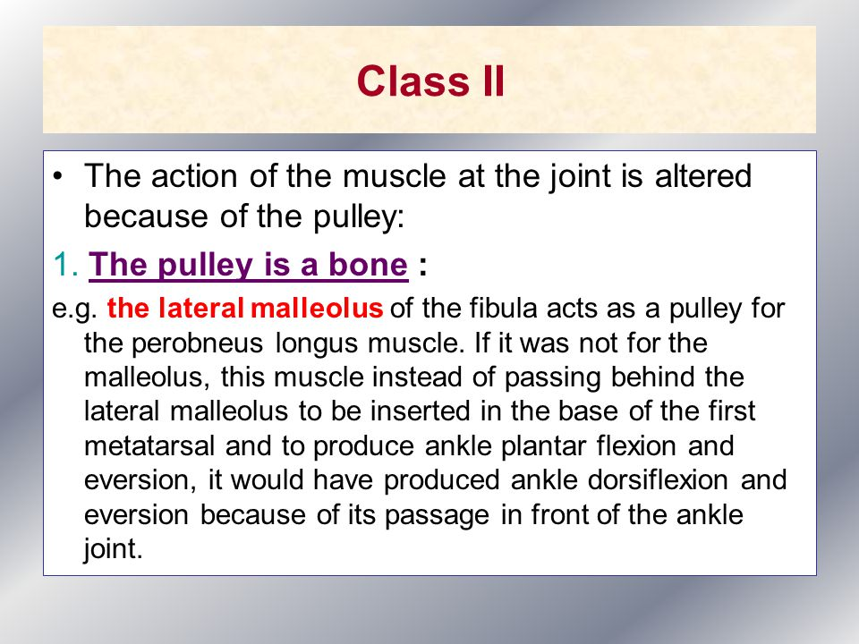 Class II The action of the muscle at the joint is altered because of the pulley: 1.