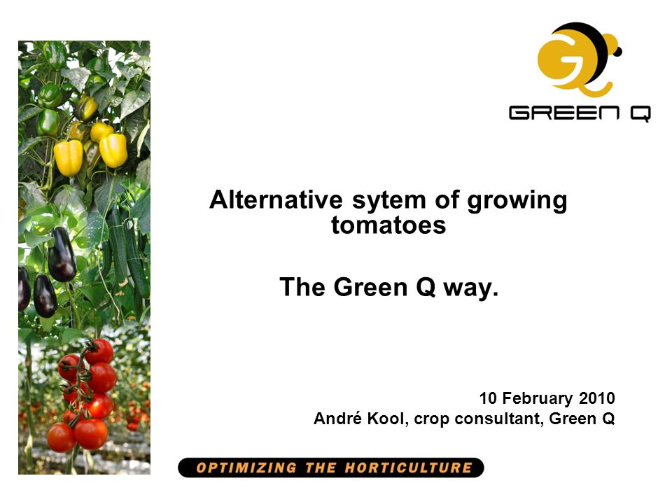 Alternative sytem of growing tomatoes Starting points Double screen Low density start 1.67-1.90 heads / m 2 Single grafted plant (1 on 1) Doubled in spring f.e.