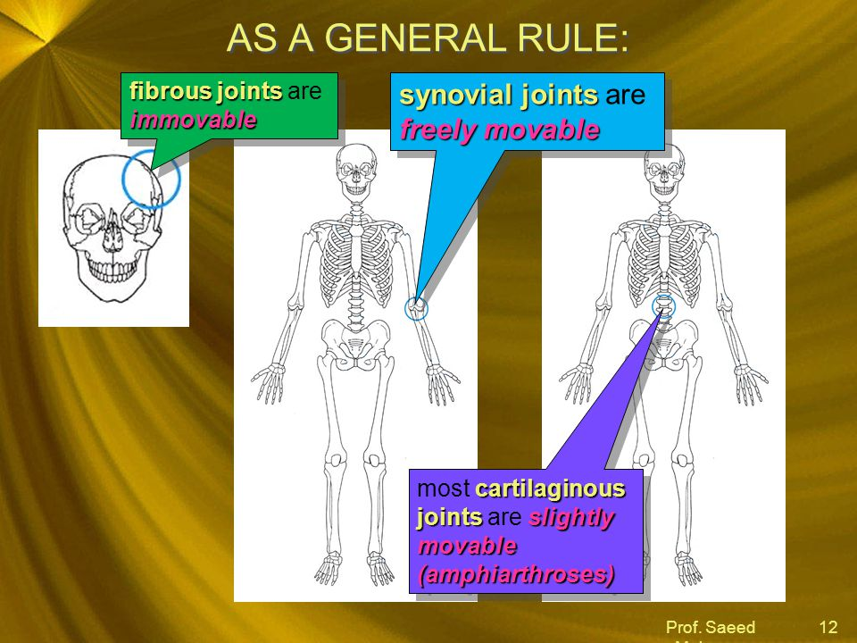 Prof. Saeed Makarem 12 AS A GENERAL RULE: fibrous joints immovable fibrous joints are immovable synovial joints freely movable synovial joints are fre