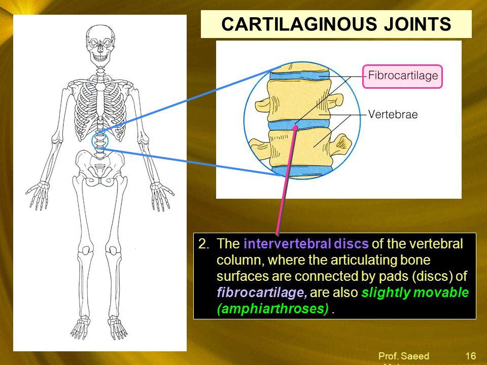 Prof. Saeed Makarem 16 intervertebral discs fibrocartilage, slightly movable (amphiarthroses) 2.The intervertebral discs of the vertebral column, wher