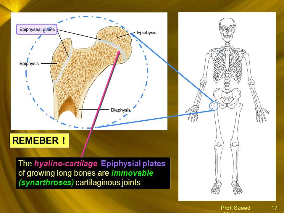 Prof. Saeed Makarem 17 hyaline-cartilage Epiphysial plates immovable (synarthroses) The hyaline-cartilage Epiphysial plates of growing long bones are