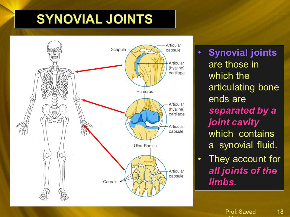 Prof. Saeed Makarem 18 SYNOVIAL JOINTS Synovial joints separated by a joint cavitySynovial joints are those in which the articulating bone ends are se