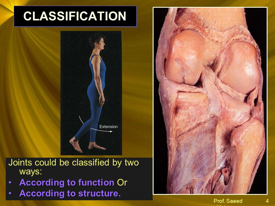 Prof. Saeed Makarem 4 CLASSIFICATION Joints could be classified by two ways: According to functionAccording to function Or According to structure.Acco