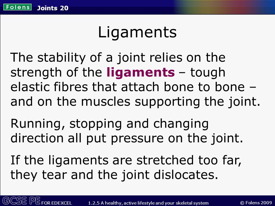 © Folens 2009 FOR EDEXCEL 1.2.5 A healthy, active lifestyle and your skeletal system Ligaments The stability of a joint relies on the strength of the ligaments – tough elastic fibres that attach bone to bone – and on the muscles supporting the joint.