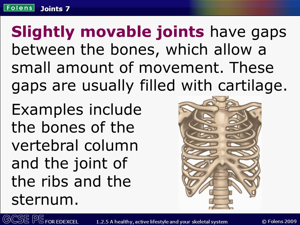 © Folens 2009 FOR EDEXCEL 1.2.5 A healthy, active lifestyle and your skeletal system Synovial fluid acts as packing, preventing friction between the moving parts and lubricating the joint.