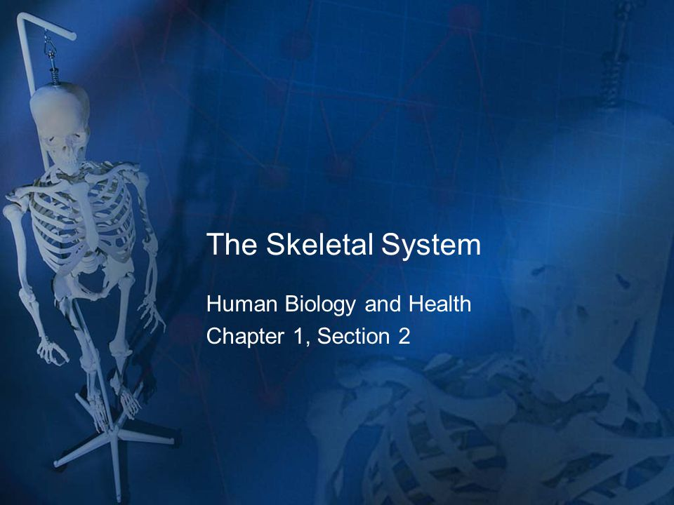 The Skeletal System Human Biology and Health Chapter 1, Section 2