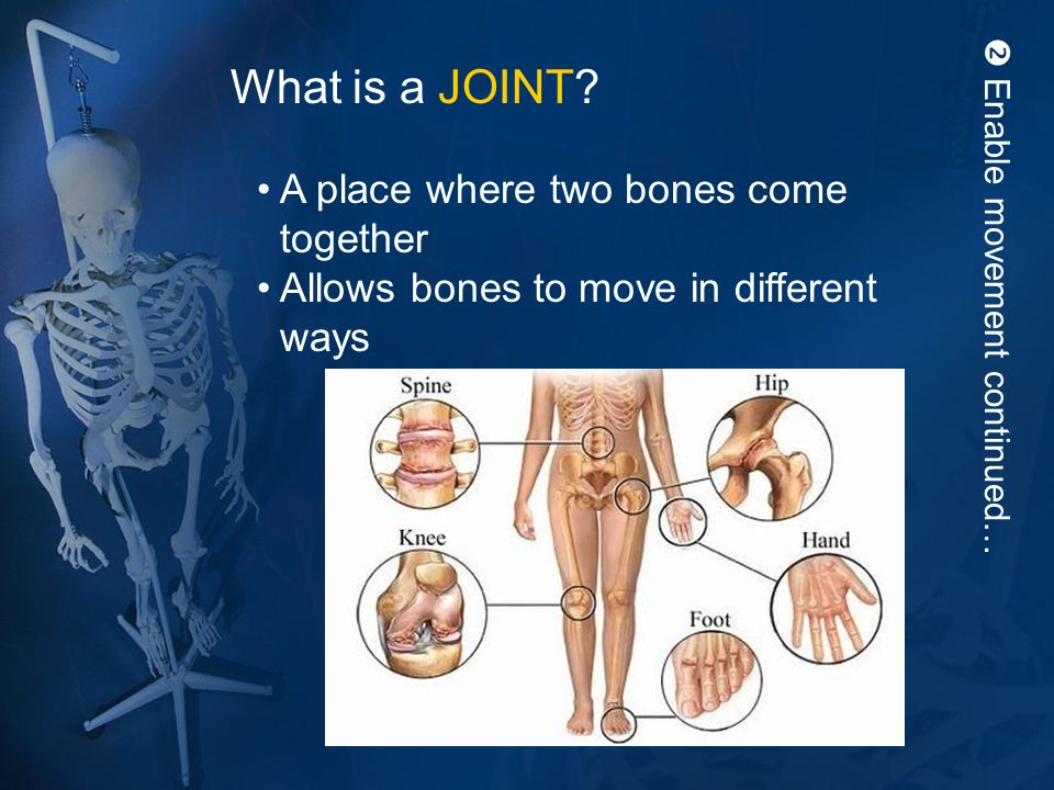  Enable movement continued… What is a JOINT? A place where two bones come together Allows bones to move in different ways