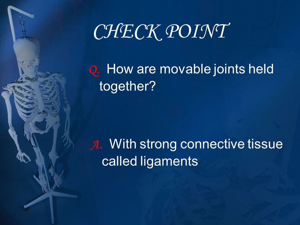 CHECK POINT Q. How are movable joints held together? A. With strong connective tissue called ligaments