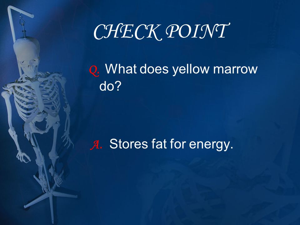 CHECK POINT Q. What does yellow marrow do? A. Stores fat for energy.