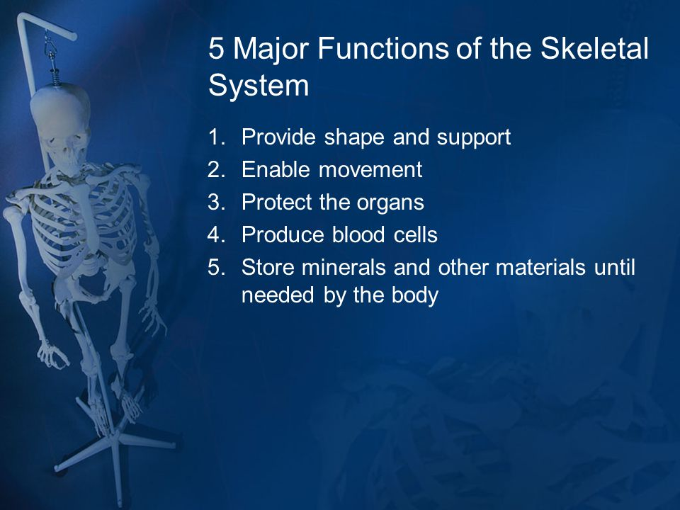 5 Major Functions of the Skeletal System 1.Provide shape and support 2.Enable movement 3.Protect the organs 4.Produce blood cells 5.Store minerals and