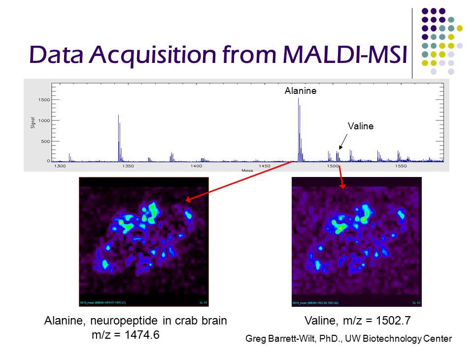 Data Acquisition from MALDI-MSI Alanine, neuropeptide in crab brain m/z = 1474.6 Valine, m/z = 1502.7 Alanine Valine Greg Barrett-Wilt, PhD., UW Biotechnology Center