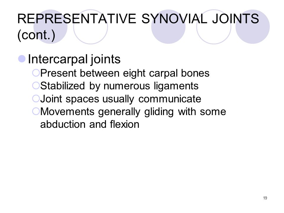 19 REPRESENTATIVE SYNOVIAL JOINTS (cont.) Intercarpal joints  Present between eight carpal bones  Stabilized by numerous ligaments  Joint spaces us