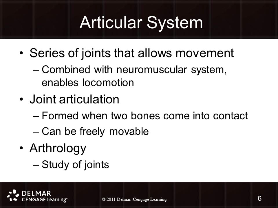 © 2010 Delmar, Cengage Learning 6 © 2011 Delmar, Cengage Learning Articular System Series of joints that allows movement –Combined with neuromuscular system, enables locomotion Joint articulation –Formed when two bones come into contact –Can be freely movable Arthrology –Study of joints 6