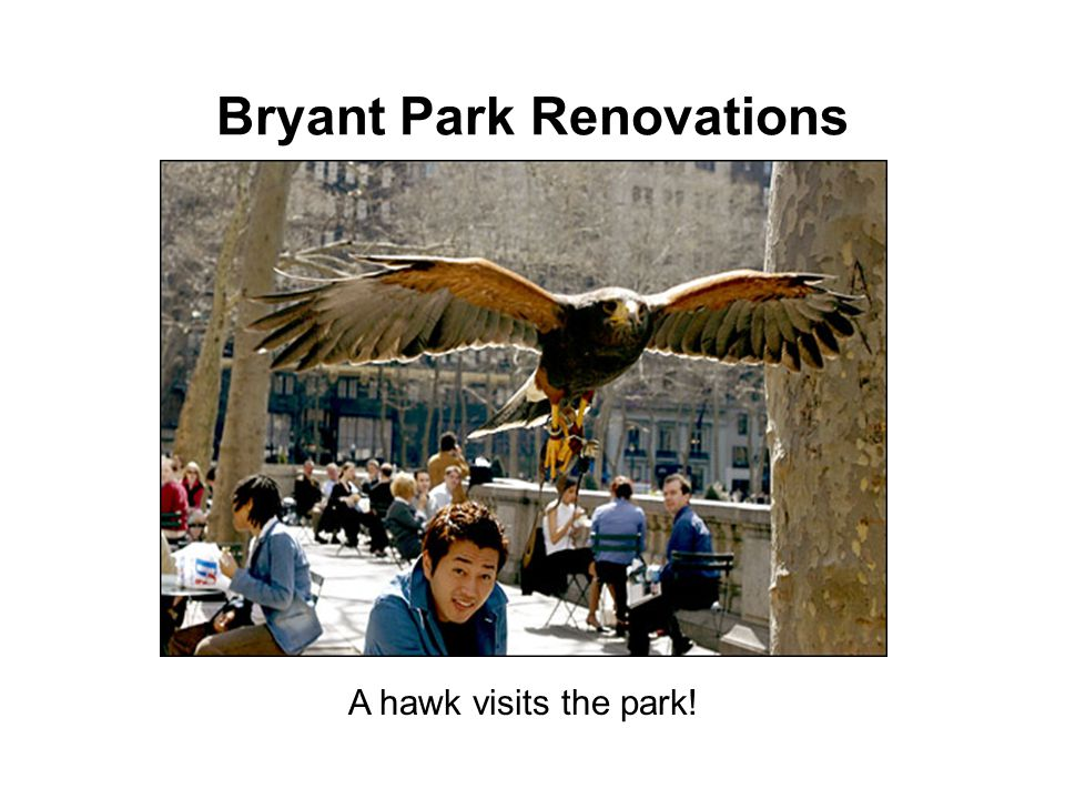 Bryant Park Renovations A hawk visits the park!