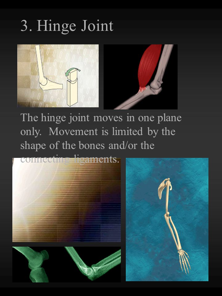 3.Hinge Joint The hinge joint moves in one plane only.