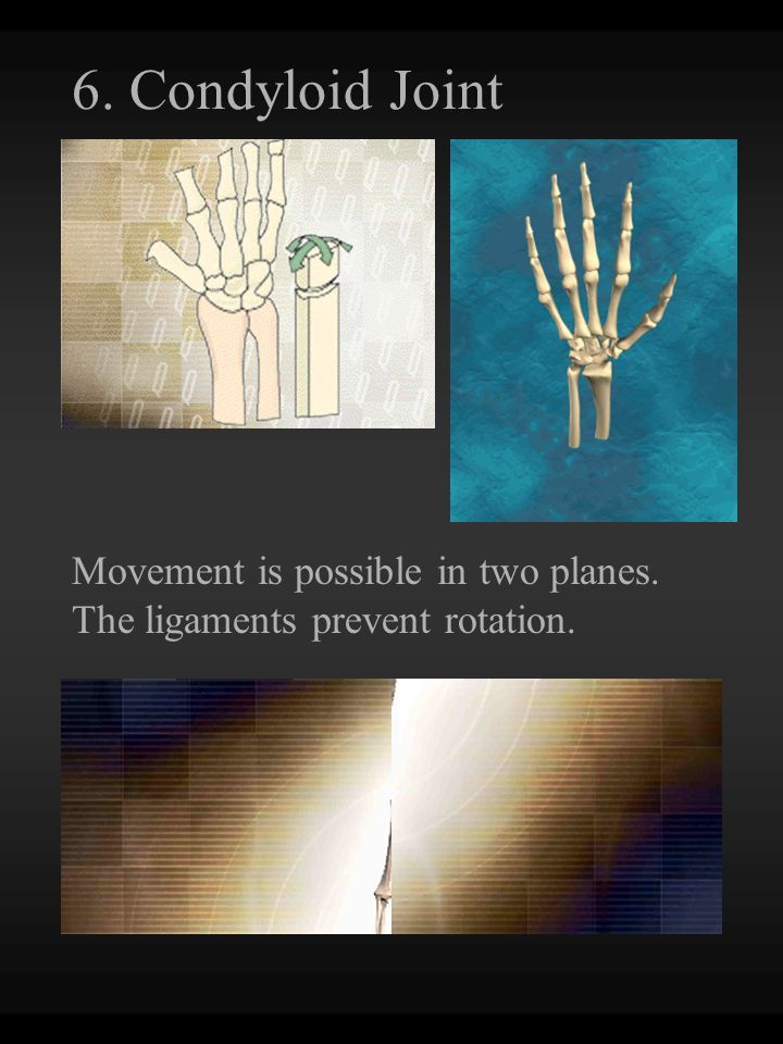 6. Condyloid Joint Movement is possible in two planes. The ligaments prevent rotation.