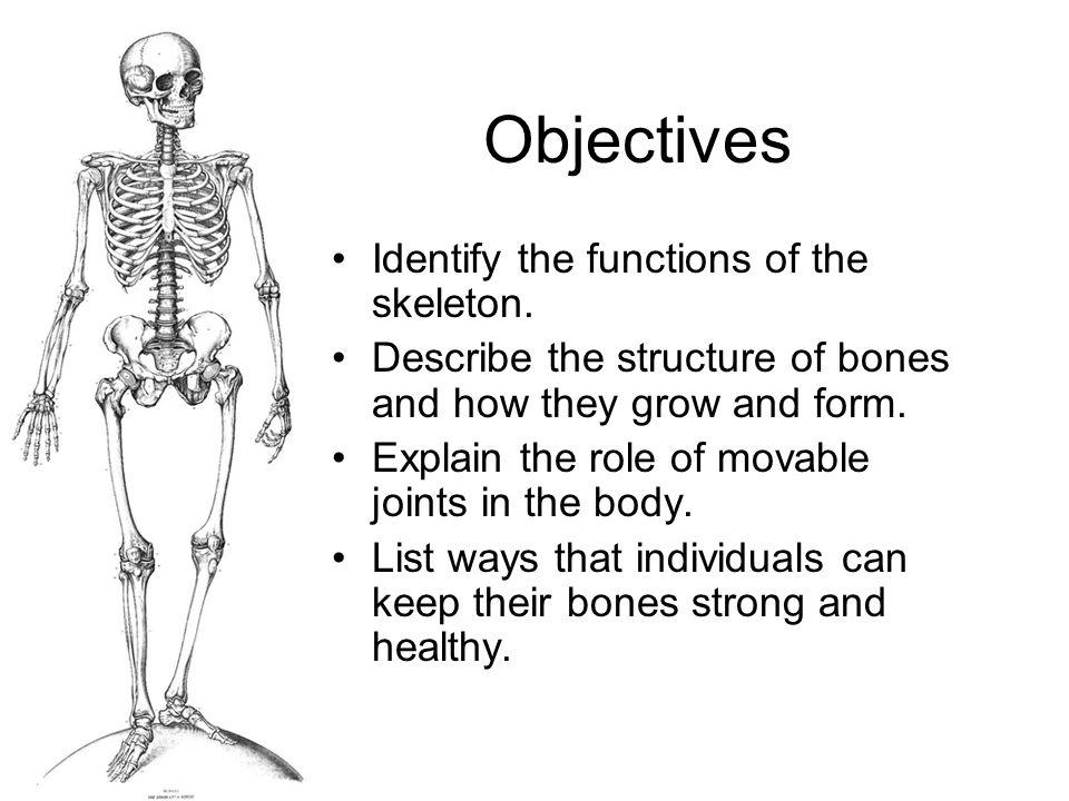 Vocabulary Words Vertebra Marrow Cartilage Joint Ligament Osteoporosis