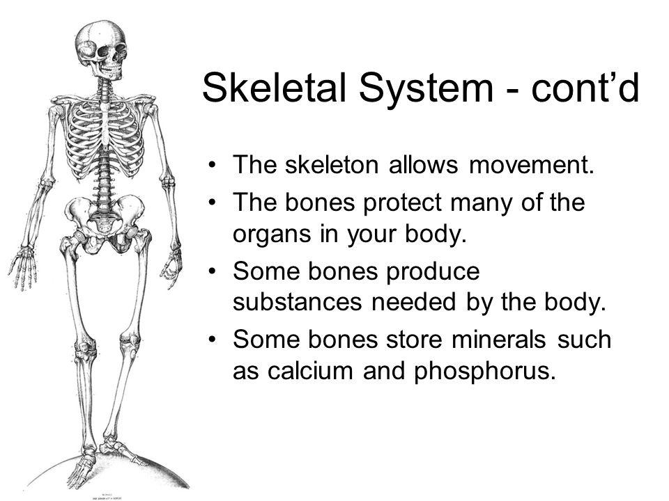 Bones Bones are alive.Bones are strong and lightweight.