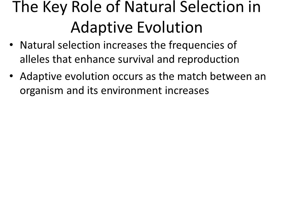 The Key Role of Natural Selection in Adaptive Evolution Natural selection increases the frequencies of alleles that enhance survival and reproduction