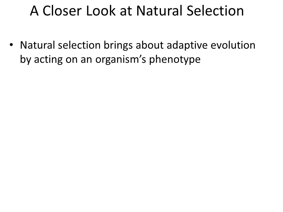 A Closer Look at Natural Selection Natural selection brings about adaptive evolution by acting on an organism's phenotype