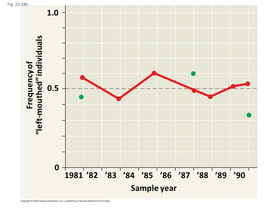 """Fig. 23-18b 1981 Frequency of """"left-mouthed"""" individuals Sample year 1.0 0.5 0 '82 '83 '84'85 '86'87'88'89'90"""