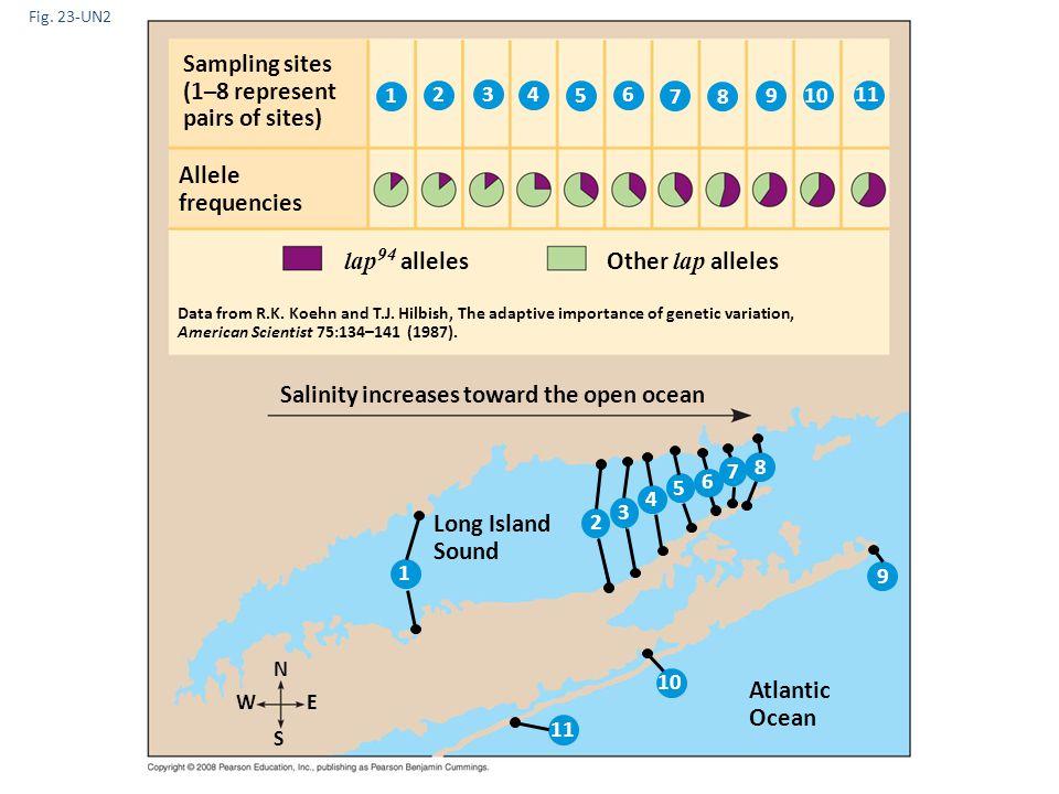 Fig. 23-UN2 Sampling sites (1–8 represent pairs of sites) Salinity increases toward the open ocean N Long Island Sound Allele frequencies Atlantic Oce