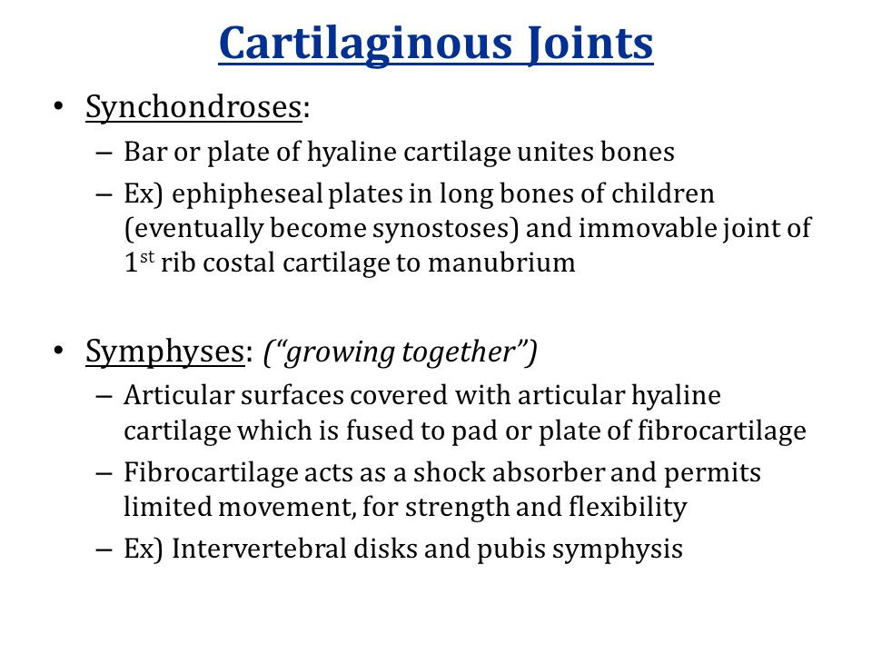 Cartilaginous Joints Synchondroses: – Bar or plate of hyaline cartilage unites bones – Ex) ephipheseal plates in long bones of children (eventually be