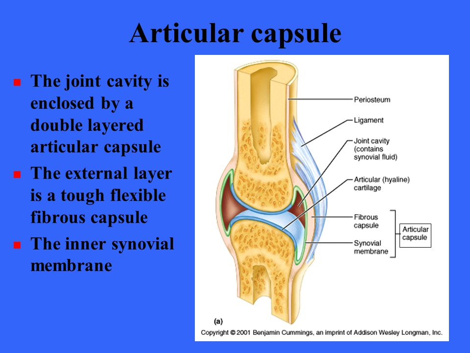 Articular capsule The joint cavity is enclosed by a double layered articular capsule The external layer is a tough flexible fibrous capsule The inner