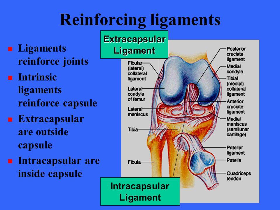 Reinforcing ligaments Ligaments reinforce joints Intrinsic ligaments reinforce capsule Extracapsular are outside capsule Intracapsular are inside capsule ExtracapsularLigament Intracapsular Ligament
