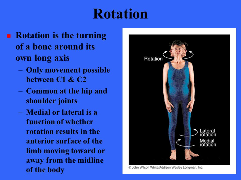 Rotation Rotation is the turning of a bone around its own long axis –Only movement possible between C1 & C2 –Common at the hip and shoulder joints –Me
